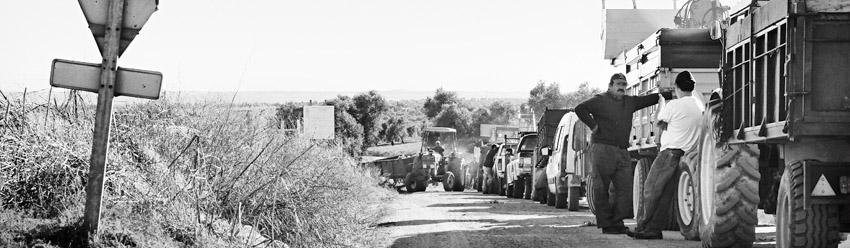 Olivareros esperando el turno de descarga y pesaje de la aceituna
